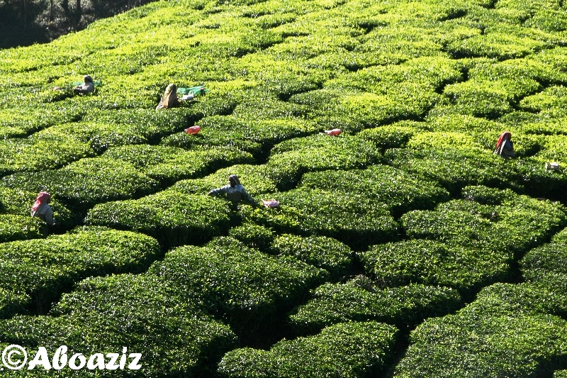 http://aboaziz.net/myimages/best_pic/26.jpg