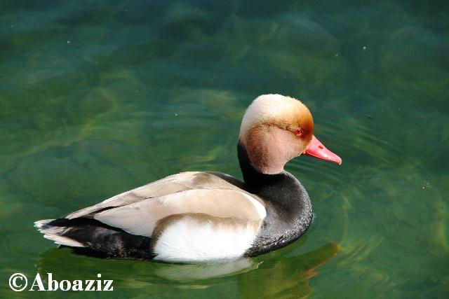 http://aboaziz.net/myimages/best_pic/28.jpg